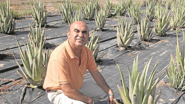 Pablo Peinado en su plantación de aloe vera
