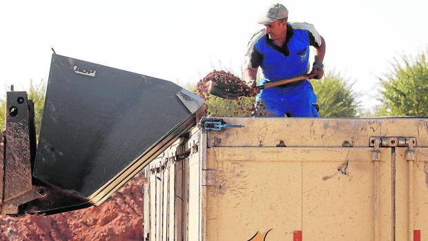 Un operario descarga un caminón de almendras para su elaboración