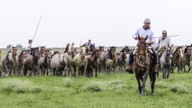Yegüerizos almoneños desarrollan sus tareas ganaderas en el interior del P.N. de Doñana