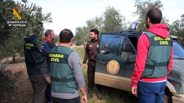 Agentes de la Guardia Civil, en un olivar de Córdoba