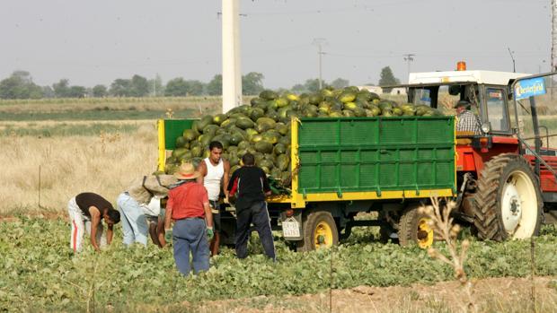 Imagen de archivo de un camión con melones