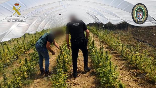 Agentes de la Guardia Civil y de la Policía Local en la plantación