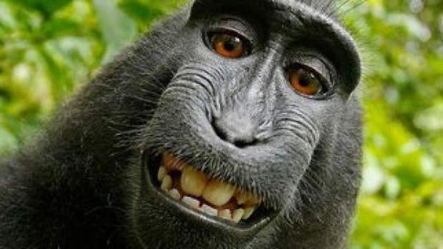 Uno de los selfies del mono Naruto