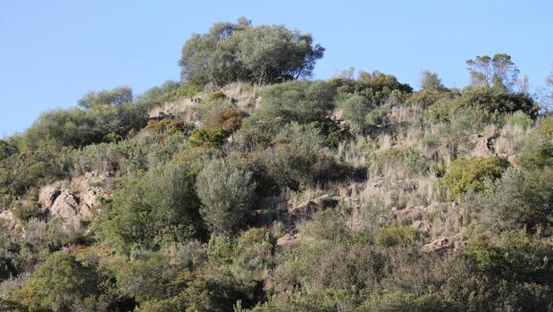 Finca de caza en la zona de Villaviciosa de Córdoba