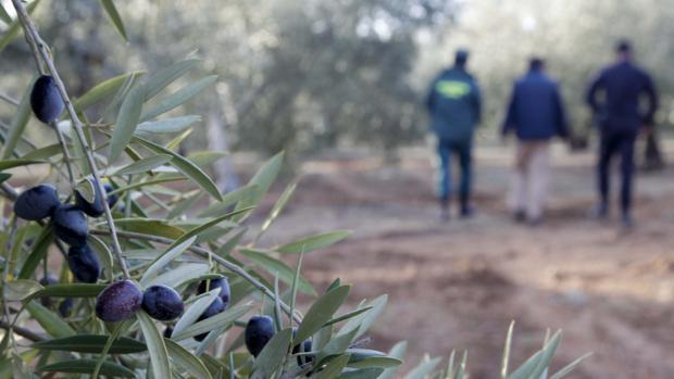 Los robos en el campo han descendido en Andalucía, un 15%, pero en Sevilla han repuntado un 2,5%