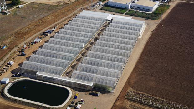 Vista aérea de las instalaciones de Corteva Agriscience en Sevilla