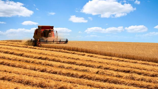 La cosecha de trigo está ya al 90 por ciento