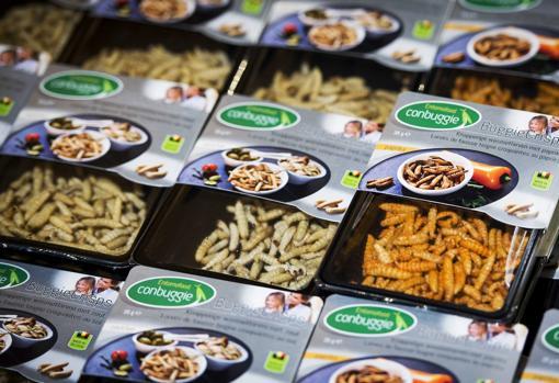 Aperitivos a base de larvas de insectos en un supermercado de Holanda