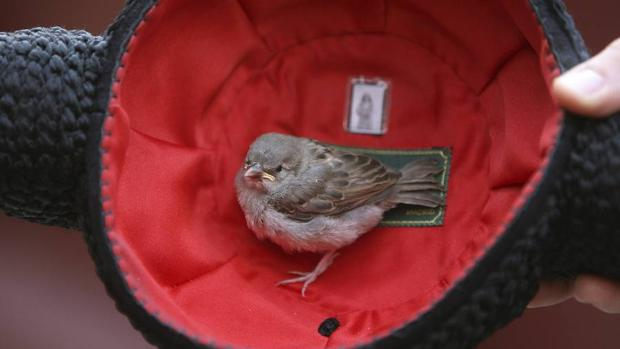 España es el primer país de Europa en observaciones de aves
