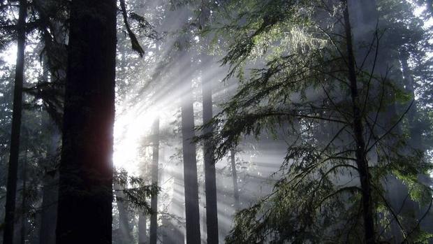Elaboran un mapa con los bosques cuya protección es prioritaria en España