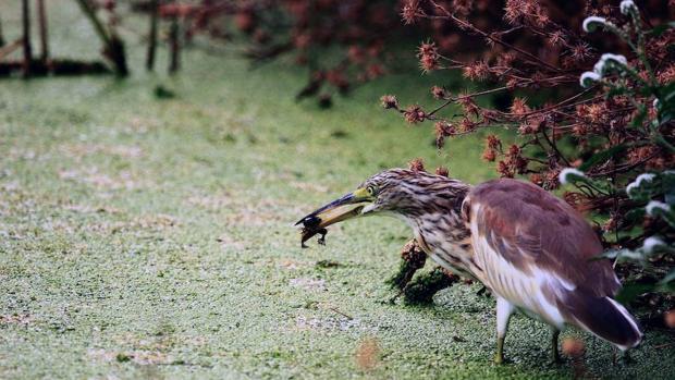 El Clot de Galvany: un paraíso ornitológico en primera línea de costa, rodeado de núcleos urbanos