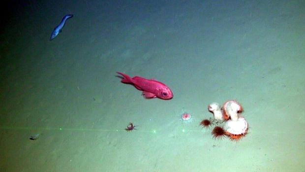 La mayoría de los estados costeros de la UE no cumplen sus compromisos con la biodiversidad marina