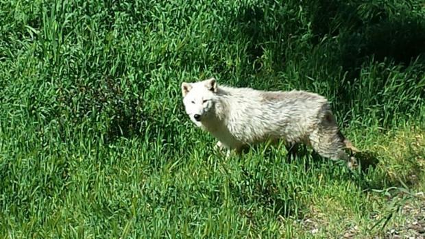 Uno de los ejemplares recién llegados al a reserva natural de El Castillo de las Guardas