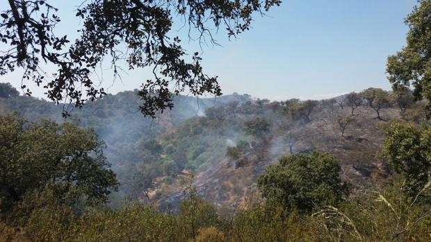Incendio forestal en el paraje Vega del Trabuco