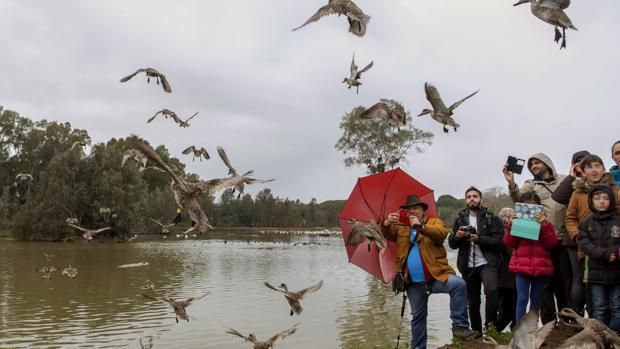 Avistamiento en La Cañada de los Pájaros