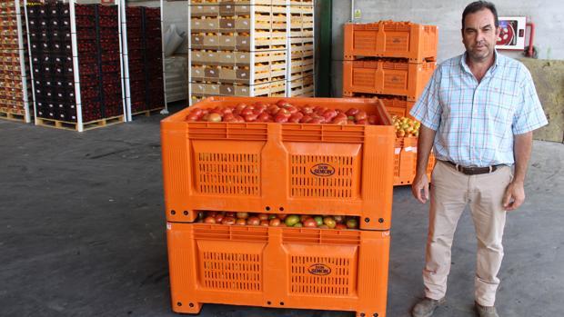 Juan Begines, presidente de la Cooperativa Virgen de las Nieves, posa junto a una carga de tomates
