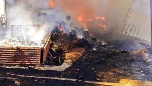 Un incendio en una nave del Aljarafe provoca la muerte de un caballo