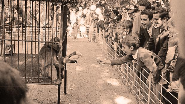 Un mono enjaulado, atracción de la Sevilla de los 60