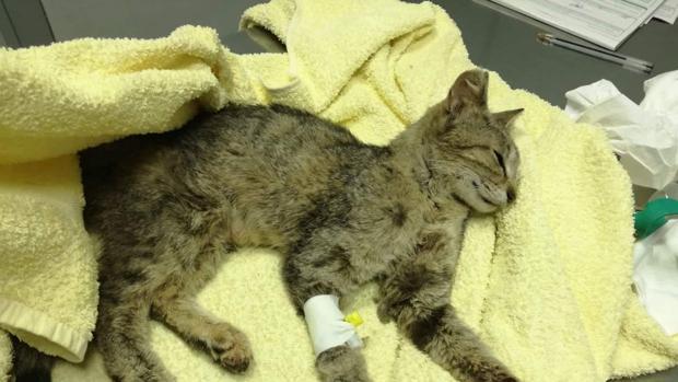 El gatita enferma que falleció hace unas semanas en Sevilla