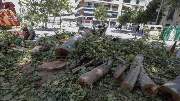 Tala de árboles en la avenida de Cádiz