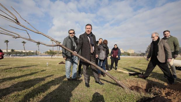 Espadas, en la plantación realizada en Miraflores