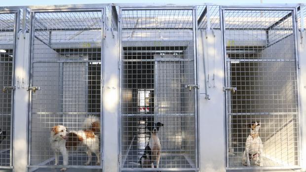 Perreras individuales del Centro Municipal Zoosanitario de Sevilla